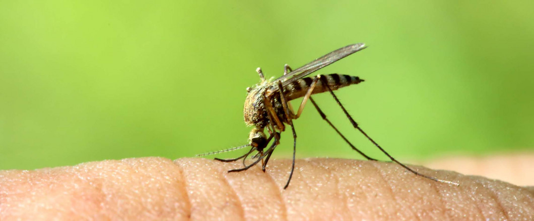 Say Goodbye to Mosquitoes